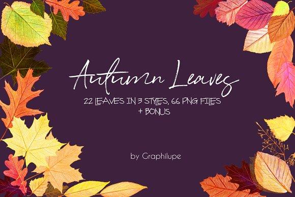 Autumn Leaves Illustration Kit