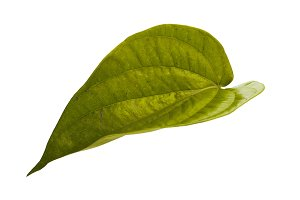 betel leaf tropical leaves