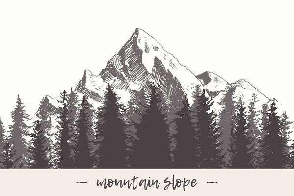 Mountain slope with a fir forest