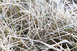 grass in winter