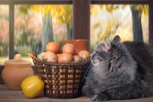 Rustic still life with cat and basket of eggs