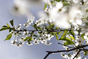 tree in spring.
