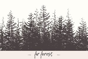 Fir forest background