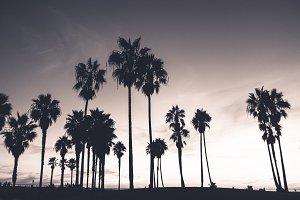 Sunset in Venice Beach