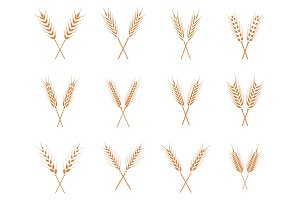 Vector wheat ears icons set.