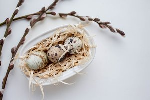 eggs with pussy willow on white