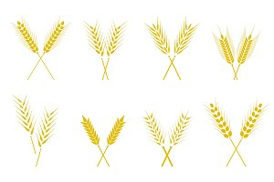 Set of simple wheats ears icons and wheat design elements.