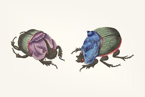 Drawing of cyanean beetles bowing