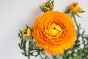 orange buttercup flower