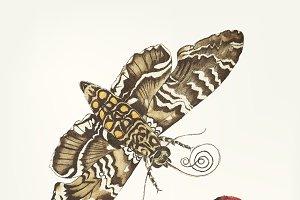 Drawing of Metamorphosis bug