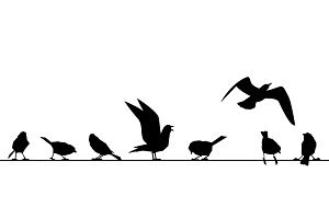 Feathered ones sit on wires. Vector silhouettes of birds isolated on white background.