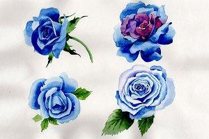 Wildflower blue rose PNG watercolor