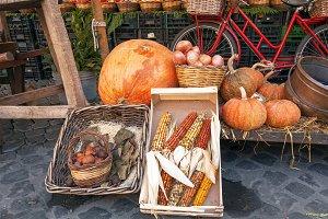 Fresh autumnal vegetables