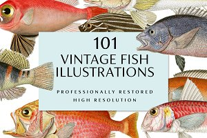 Vintage Fish Illustrations