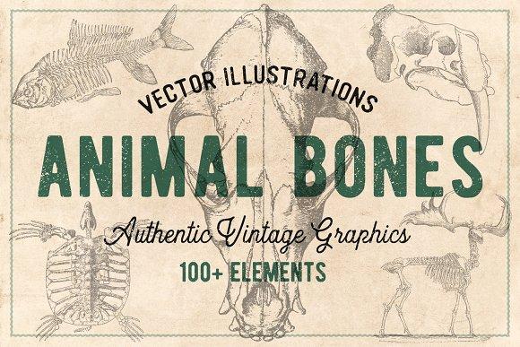 125 Vintage Animal Bones