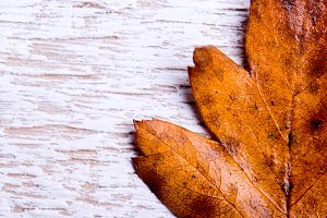 Autumn composition. Brown leaf on white wooden background.