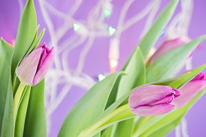 Pink tulips over ultra violet background