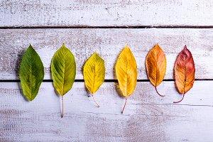 Autumn composition. Various colorful leaves. Studio shot