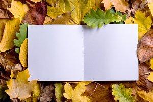 Autumn leaf composition, greeting card. Studio shot, wooden back
