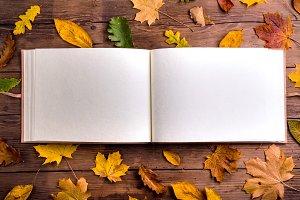 Autumn leaf composition, photo album. Studio shot, wooden back