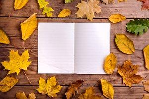 Autumn leaf composition, notebook. Studio shot, wooden back