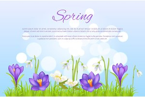 Spring Poster Greeting Card Springtime Flowers
