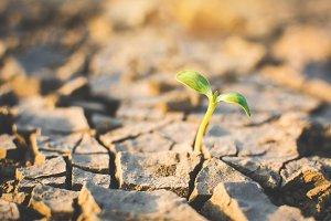 plant on crack dry ground