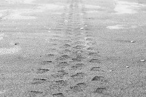 Car Marks in the Sand in Black White