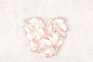 Tulip petals heart