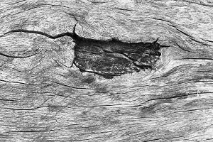 Rustic Wood Detail in Black White