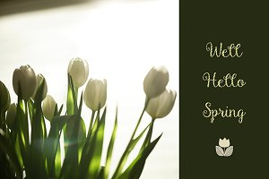 Tulips and Spring Text