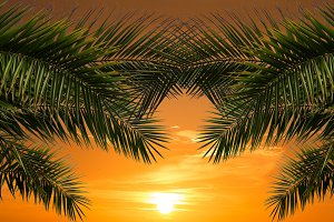 Palm and Sun