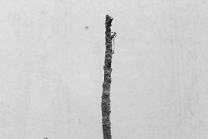 Isolated Twig in a White Background