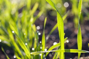 green wet grass