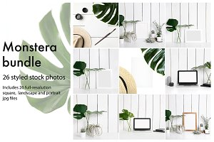 Monstera photo bundle