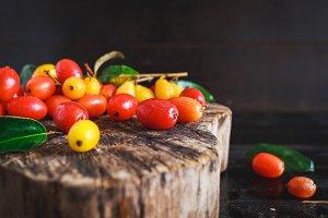 Elaeagnus Latifolia Fruits