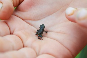 little frog in the palm of your hand