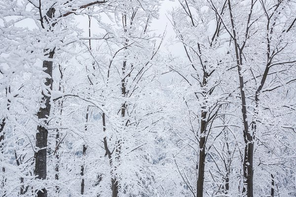 Serenity of winter forest