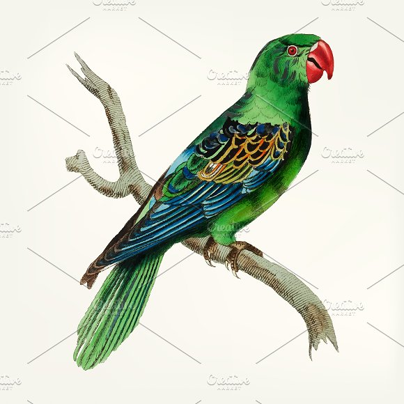 Hand Drawn Of Great-billed Parrot