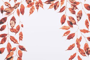 Autumn leaves frame on white