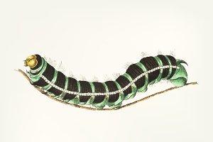 Hand drawn of caterpillar