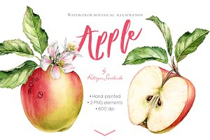 Watercolor Apple: whole and half