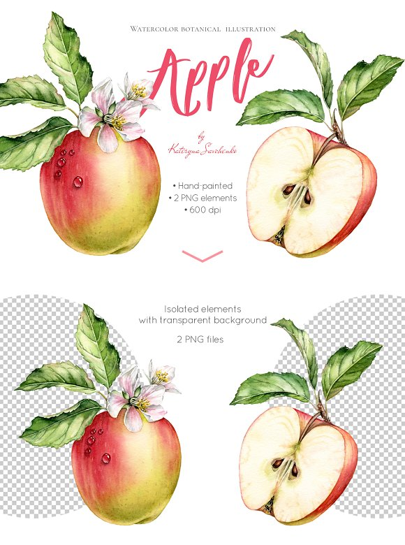 Watercolor Apple Whole And Half