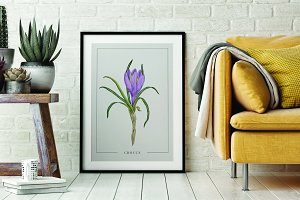 Poster with Crocus Watercolor