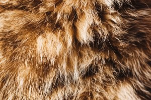 background and texture. animal hair.