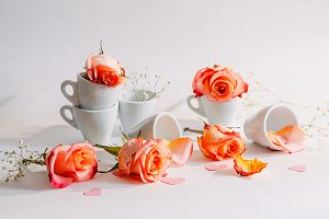 roses. cups. delicate flowers. natur