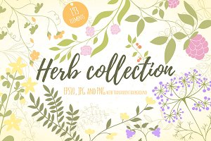 Hand-drawn herbs design set