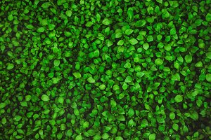 green leaves. view from above. textu