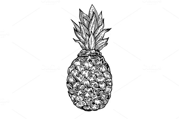 Pineapple Engraving Vector Illustration