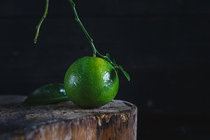 Green mandarin fruits